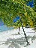 Beach  Bora Bora (Borabora)  Society Islands  French Polynesia  South Pacific Islands  Pacific