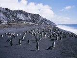 Black and White Chinstrap Penguins  Antarctica  Polar Regions