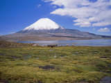 Lake Chungara and the Snow Capped Volcano Parinacota  Chile  South America