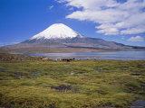 Lake Chungara and the Snow Capped Volcano Parinacota  Chile  South America