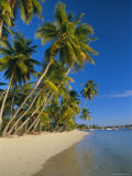 Palm Trees and Beach  Pigeon Point  Tobago  Trinidad and Tobago  West Indies