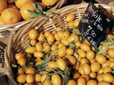 Kumquats for Sale on the Market in Cours Saleya  Nice  Alpes Maritimes  French Riviera  France