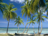 Tropical Landscape of Palm Trees at Pigeon Point on the Island of Tobago  Caribbean