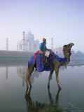 Camel and Rider in Front of the Taj Mahal and Yamuna River  Taj Mahal  Uttar Pradesh State  India
