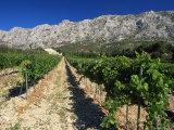 Vinyard at the Foot of Motagne Ste-Victorie Near Aix-En-Provence  Bouches-De-Rhone  France