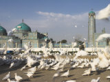 Famous White Pigeons at the Shrine of Hazrat Ali  Afghanistan