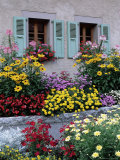 Colourful Garden Flowers and Green Shutters  Servoz  Near Chamonix  Rhone-Alpes  France