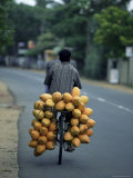 Man Carrying Coconuts on the Back of His Bicycle  Sri Lanka  Asia