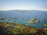 Autumnal Bloom  Senja Vewied from Sommeroy (Summer Isle)  Near Tromso  Norway  Scandinavia
