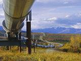 Trans Alaska Oil Pipeline Across Taiga Through Alaskan Range Carried on Insulated Ground Piles