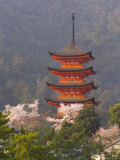 Cherry Blossoms (Sakura) and Famous Five-Storey Pagoda Dating from 1407  Island of Honshu  Japan