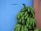 Unripened Bananas  Island of Tobago  West Indies  Caribbean  Central America