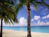 Palm Trees  Beach and Still Turquoise Sea  Seven Mile Beach  Cayman Islands  West Indies