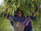Portait of Local Girl Carrying a Large Bundle of Wheat and Yellow Meskel Flowers  Ethiopia