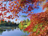 Sheffield Park Garden  the Middle Lake Framed by Scarlet Acer Leaves  Autumn  East Sussex  England
