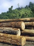 Logging in the Rain Forest  Island of Borneo  Malaysia