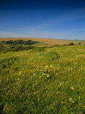 Wild Flowers on the Downland of the South Downs at East Dean  England  UK