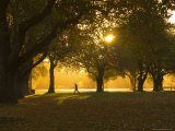 Man Walking Under Trees  Hagley Park  Christchurch  Canterbury  South Island  New Zealand  Pacific