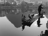 Cormorant Fisherman  Yangshuo  Guangxi Province  China  Asia