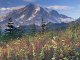 Landscape  Mount Rainier National Park  Washington State  United States of America  North America