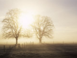 Backlit Trees and Morning Fog  Lechrain  Landsberg  Germany  Europe