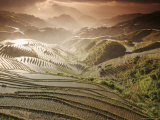 June Sunrise  Longsheng Terraced Ricefields  Guangxi Province  China  Asia