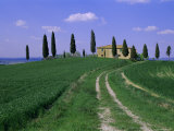 House and Cypress Trees  Val d'Orcia  Province of Siena  Tuscany  Italy  Europe