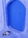 Blue Door and Cat  Chefchaouen (Chaouen) (Chechaouen)  Rif Region  Morocco  North Africa  Africa