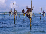 Stilt Fishermen at Welligama  South Coast  Sri Lanka  Indian Ocean  Asia