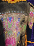 Decorated Elephant  Rajasthan  India