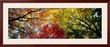 Colorful Trees in Fall  Autumn  Low Angle View