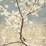 Cherry Blossoms I