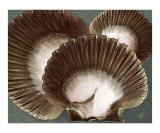 Seashells Spectacular No 22