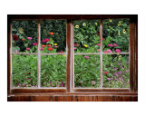 Summer Garden Thru a Rustic Window