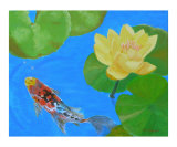 Water Lilies & Lone Koi Fish