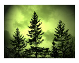 Green Sky Evergreens