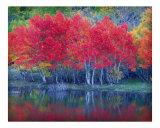 Grant Lake Aspens