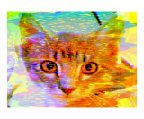Orange Eyed Tabby