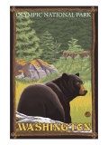 Black Bear in Forest  Olympic National Park  Washington