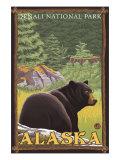 Black Bear in Forest  Denali National Park  Alaska