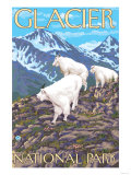 Mountain Goats Scene  Glacier National Park  Montana