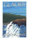 Bear Fishing in River  Glacier National Park  Montana