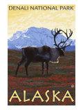 Caribou Scene  Denali National Park  Alaska