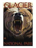 Bear Roaring  Glacier National Park  Montana