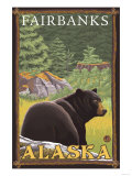 Black Bear in Forest  Fairbanks  Alaska