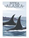 Orca Whales No1  Sitka  Alaska