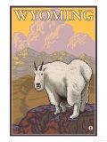 Mountain Goat  Wyoming