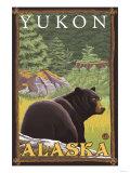 Black Bear in Forest  Yukon  Alaska