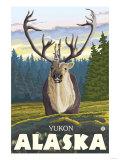 Caribou in the Wild  Yukon  Alaska