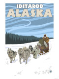 Dog Sledding Scene  Iditarod  Alaska